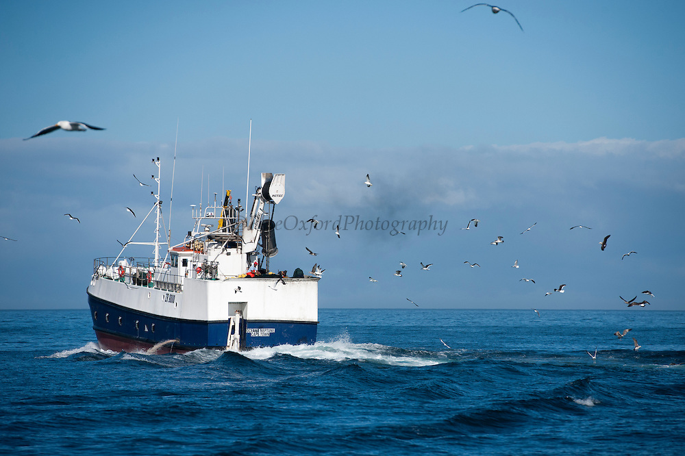 Fishing boat<br /> Hout Bay<br /> Western Cape<br /> SOUTH AFRICA