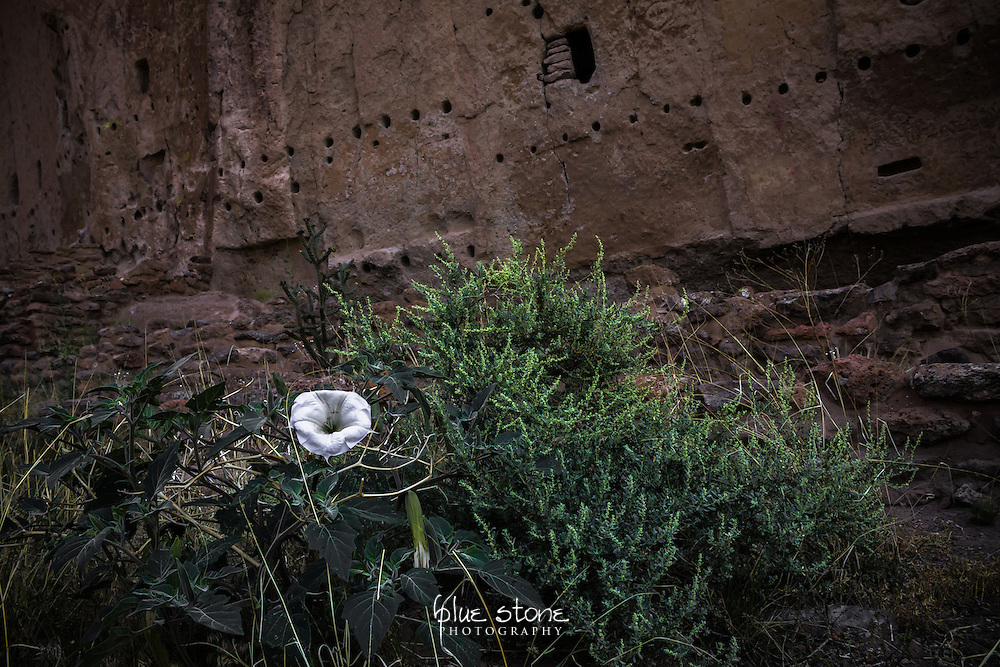 A white wildflower set against the cliff dwellings that were used by the Ancestral Pueblo peoples of the southwest represents isolation.<br /> <br /> Wall art is available in metal, canvas, float wrap and standout. Art prints are available in lustre, glossy, matte and metallic finishes.