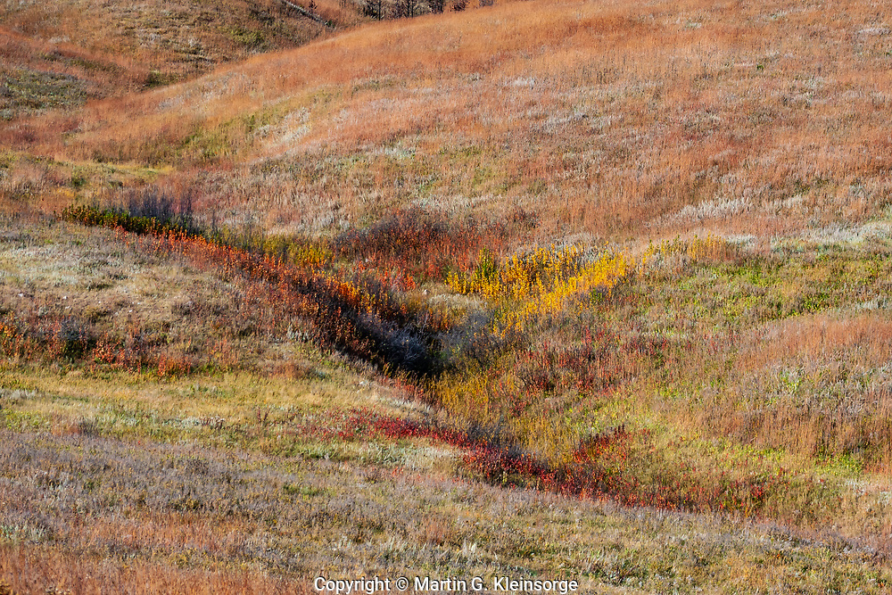 The greens, reds and brown colors  of the autumn season on the prairie grasslands along a intermittent flowing stream. Custer State Park, South Dakota.