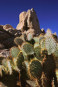 Joshua Tree National Monument, S. California. Rock Climbing.