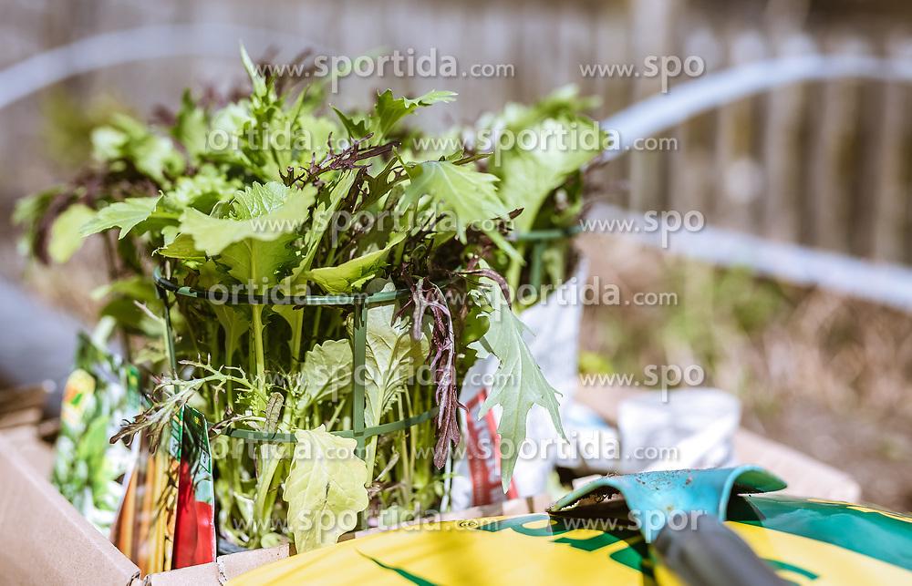 THEMENBILD -, aufgenommen am 16. Monat 2019, Ort, Österreich // on 2019/mm/dd, Ort, Austria. EXPA Pictures © 2019, PhotoCredit: EXPA/ Stefanie Oberhauser