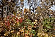 Iowa fall trees.