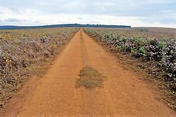 Road In Nyika National Park