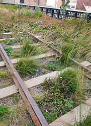 Detail of original rail tracks and new landscaping at  new High Line elevated landscaped public walkway built on old railway viaduct in Chelsea district of Manhattan in New York City USA