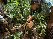 The dog found a lead for an animal, the kids try to get the animal out of its hole with their machete. Going foraging with Roxana Nate and her siblings, in the jungle.