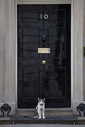 © licensed to London News Pictures. London, UK 25/07/2012. Larry, Downing Street cat pictured outside No 10 in Downing Street. Photo credit: Tolga Akmen/LNP