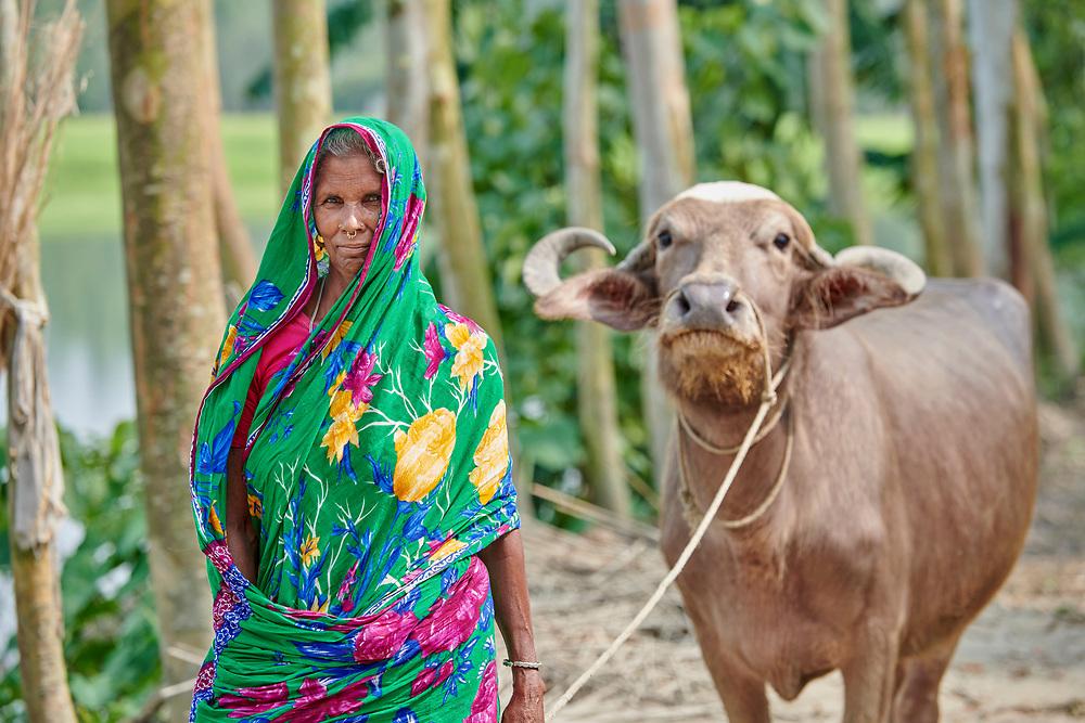 A woman walks her water buffalo through West Fasura, a village on an island in the Brahmaputra River in northern Bangladesh.