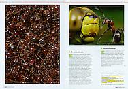 Publication: KIJK Magazine (Netherlands) Nr. 8, August 2009.Photography by Heidi & Hans-Jurgen Koch/animal-affairs.com