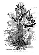 """The """"Extinction"""" of Species; Or, the fashion-plate lady without mercy and the egrets."""