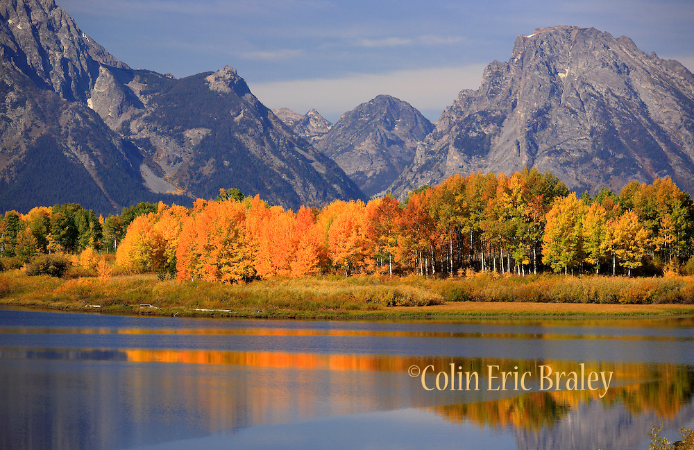 The Tetons range can be seen in the background as the fall colors shine on a sunny day in Grand Teton National Park in Wyoming. Colin Braley/Wild West Stock