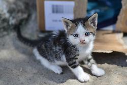 April 24, 2018 - Nea Artaki, central greeece, Greece - Young kitties in Nea Artaki on Euboea on April 24, 2018  (Credit Image: © Wassilios Aswestopoulos/NurPhoto via ZUMA Press)