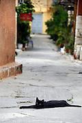 Griekenland, Nafplion, 8-7-2008Kat ligt op straat.  Ze zijn vast onderdeel van het straatbeeld.Foto: Flip Franssen