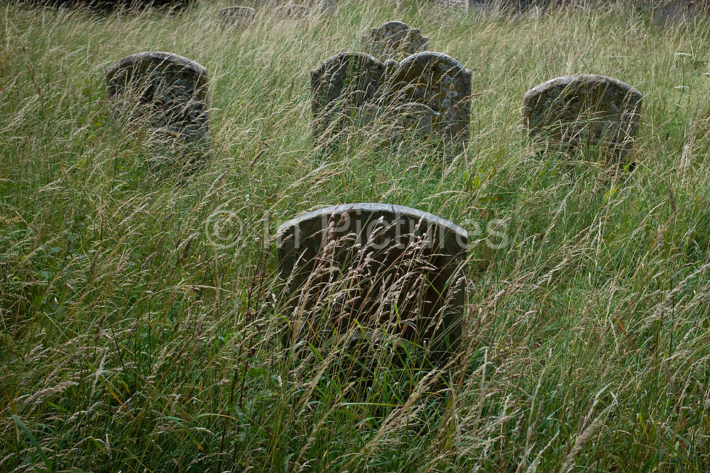 Headstones stand in long grass of the cemetery at the Church of St. Lawrence, on 10th July 2020, in Great Waldingfield, Suffolk, England.