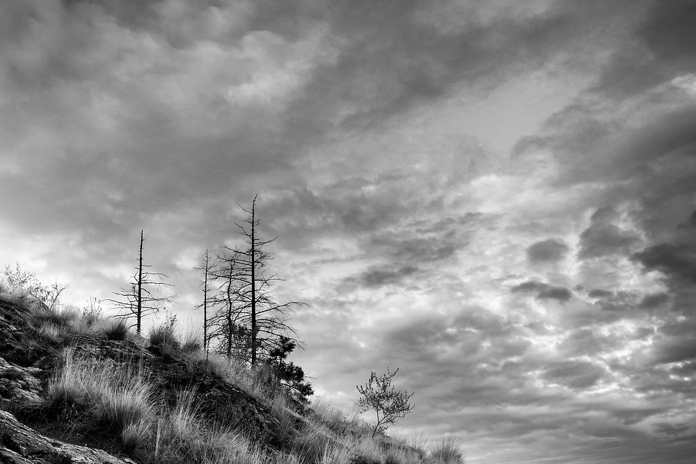 This is another photograph that was overlooked as a black and white photograph. It was taken near Kelowna in the Okanogan Valley. I was on assignment for a homebuilder when I got out early in the morning to explore a nearby provincial park. The park had experienced a significant fire two years before and the burns out trees were included in the photograph. Dry grasses had started to grow over the darkened soil and rocks. The early morning sky had some really interesting clouds, which dominate the photograph by design. The uncertainty and ominous nature of the clouds go well with the burned out and dead trees suggesting a landscape that was stressed.