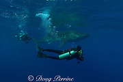 Howard and Michele Hall with whale shark, Rhincodon typus, Gladden Spit & Silk Cayes Marine Reserve, off Placencia, Belize, Central America ( Caribbean Sea )