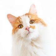 20140909  Judi Happy Cats