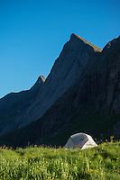 Wild camping among summer wildflowers at Horseid beach, Moskenesøy, Lofoten Islands, Norway