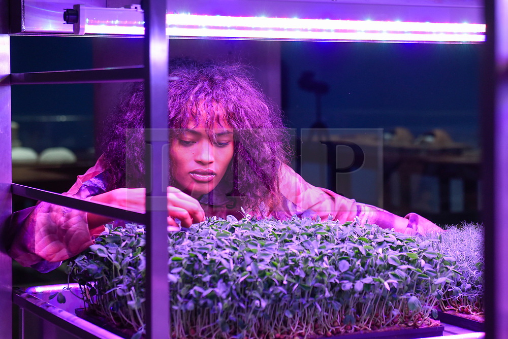 """© Licensed to London News Pictures. 17/10/2019. LONDON, UK. A model poses next to an exhibit demonstrating Mars farming. Preview of """"Moving to Mars"""" at the Design Museum. The exhibition explores how sending humans to Mars is a frontier for science as well as design and features over 200 exhibits from NASA, the European Space Agency together with new commissions.  The show is open 18 October to 23 February 2020.  Photo credit: Stephen Chung/LNP"""