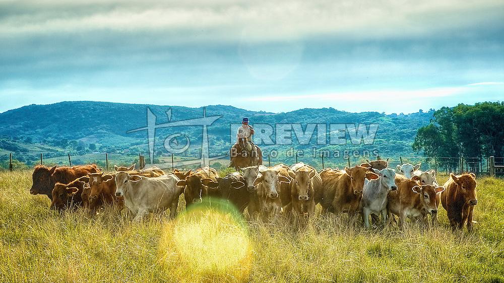 Tropeiro conduz a manda de bois próximo a uma paineira-rosa nos campos de Canguçu. FOTO: Jefferson Bernardes / Preview.com