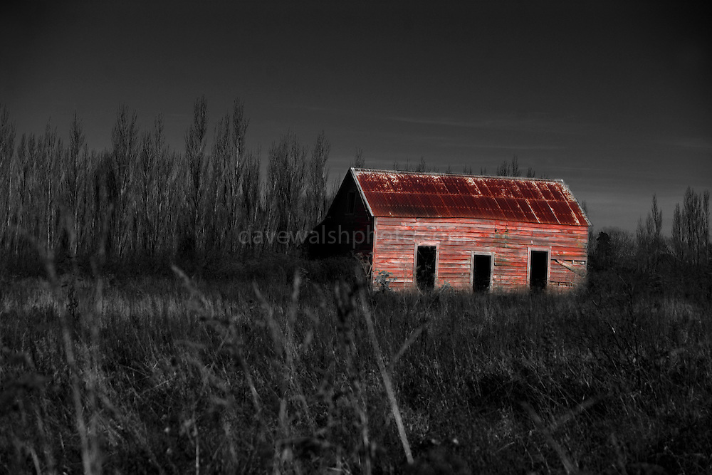 Disused shed, outside Masterton, New Zealand. Selective colouring used in post production..