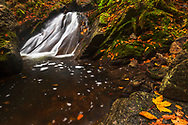 River rapid in autumn forest