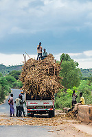 Loading sorghum cane onto a truck. Southern Nations Nationalities and People's Region, Ethiopia.