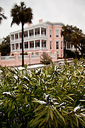 CHARLESTON, SC - February 13: Snow on the leaves of tropical oleander shrubs along the historic battery February 13, 2010 during a rare snow storm in Charleston, SC. About 3-inches of snow fell on the Charleston area, the first significant snow in 20-years.    (Photo Richard Ellis/Getty Images)
