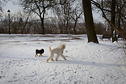 Dogs get exercise in late snow in Letna Park (Letenske Sady), on 18th March, 2018, in Prague, the Czech Republic.