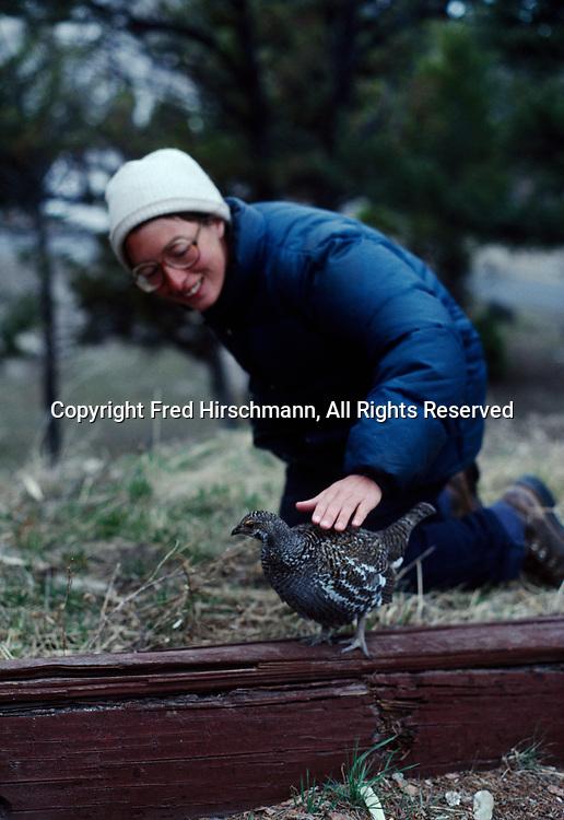 Cheryl Bloethe petting Blue Grouse, Mammoth Hot Springs, Yellowstone National Park, Wyoming.