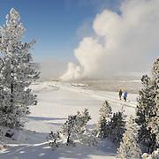 Old Faithful Geyser Basin. Yellowstone National Park, Wyoming