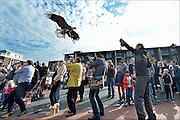 Nederland, Beuningen, 3-10-2015De Amerikaanse Zeearend is de fotografen te snel af tijdens de roofvogelshow in BeuningenFoto: Flip Franssen