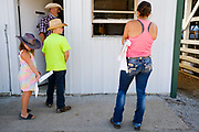 16 JULY 2020 - BOONE, IOWA: People in line to register for livestock shows on the first day of the Boone County Fair in Boone. Summer is county fair season in Iowa. Most of Iowa's 99 counties host their county fairs before the Iowa State Fair. In 2020, because of the COVID-19 (Coronavirus) pandemic, many county fairs were cancelled, and most of the other county fairs were scaled back to concentrate on 4H livestock judging. Boone county scaled back its fair this year. The Iowa State Fair was cancelled completely. Boone County Emergency Management did not approve going ahead with the fair, and has advised anyone who goes to the fair to take precautions and monitor themselves for symptoms of the Coronavirus.            PHOTO BY JACK KURTZ