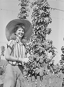 5601Hop picker, Helend Brown, Route 1, Dallas, Oregon., at the E. Clemens Horst hop ranch near Independence, Oregon. September 1, 1942.