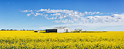 equipment shed and shelter in a field of flowering canola crop under blue sky and cumulus cloud at Cressy, Victoria, Australia. <br /> <br /> Editions:- Open Edition Print / Stock Image