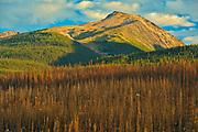 Burn from fire. Collin Range<br />Jasper National PArk<br />Alberta<br />Canada