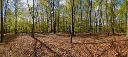 Pano Landgoed Spanderswoud, 's-Graveland, Wijdemeren, Noord Holland, Netherlands