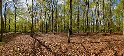 Pano Landgoed Spanderswoud, 's-Graveland, Wijdemeren, Noord Holland, Netherlands