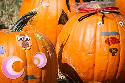 Halloween pumpkin patch, Mitchell Lake Audubon Center, San Antonio, Texas, USA.