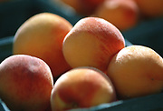 Close up selective focus photograph of a group of Peaches in the sunlight