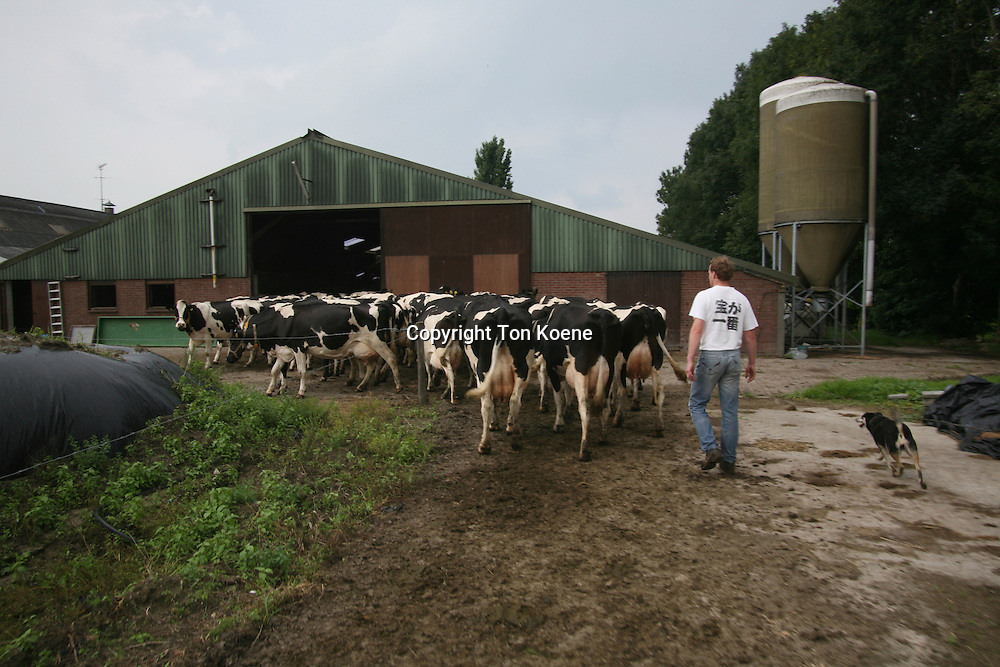 dairy farm in the netherlands.
