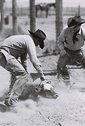 Cowboys roping a calf on a ranch