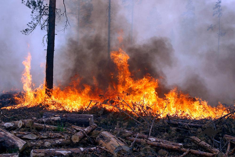 FROLAND, AUST-AGDER 20080611:<br /> Det brant onsdag formiddag friskt i skogen langs riksvei 413 i Froland kommune i Aust-Agder.<br /> Foto: Tor Erik Schrøder / SCANPIX .