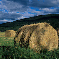 Canada, British Columbia, Hay rolled into bales in rancher's fields near town of Tatla Lake along Highway 20