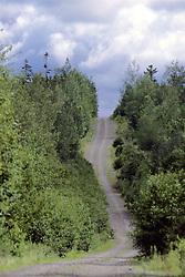 Logging Road In Forest Scenic