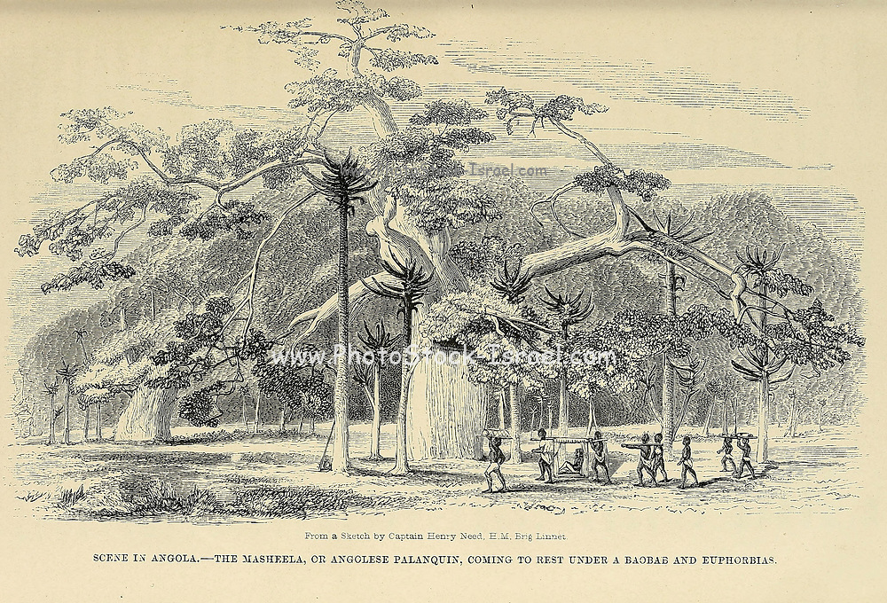 Scene in Angola The Masheela or Angolese Palanquin coming to rest under a Baobab and Euphorbias. From book ' Missionary travels and researches in South Africa : including a sketch of sixteen years' residence in the interior of Africa, and a journey from the Cape of Good Hope to Loanda, on the west coast, thence across the continent, down the river Zambesi, to the eastern ocean ' by David Livingstone Published in London in 1857