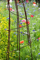 Side of metal arch in the pictorial meadow. Corn poppies, cornflowers, gypsophila and Bishop's Flowers with Bupleurum rotundifolium. Papaver rhoeas, Centaurea cyanus, Gypsophila elegans, Ammi majus. (syn. Field poppy)