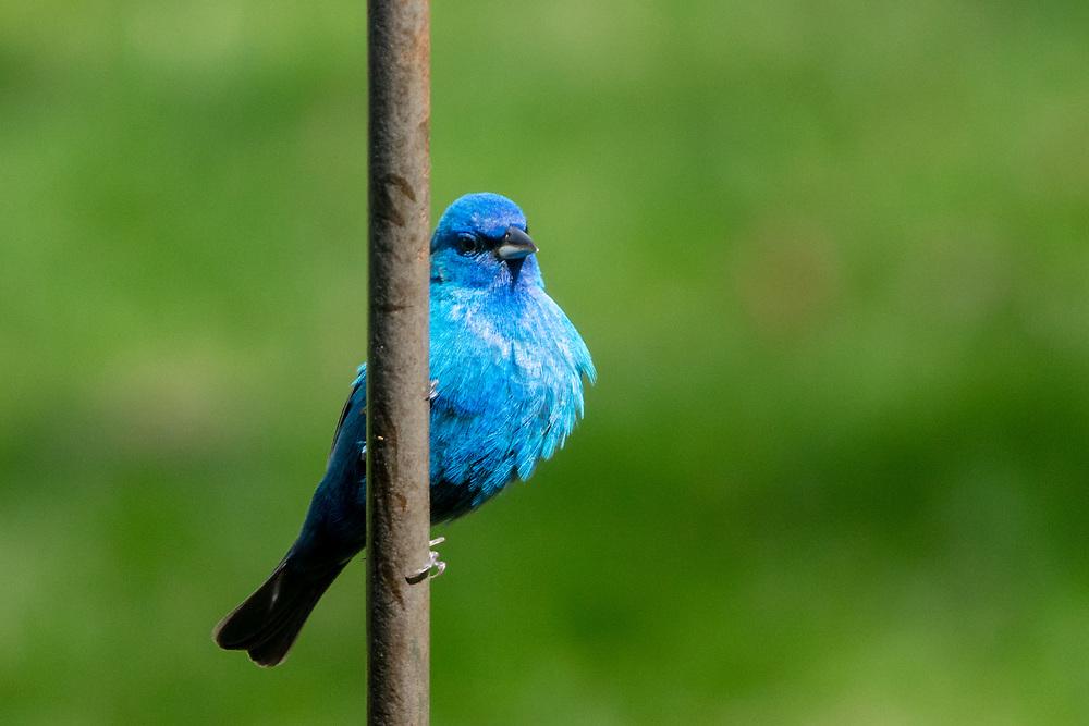 https://Duncan.co/blue-bird
