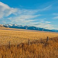 Wheat fields spread below the Bridger Mountains in the northern Gallatin Valley near Bozeman.