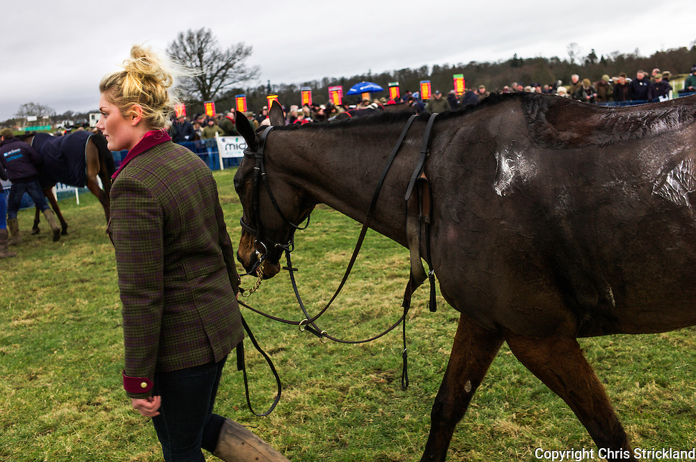 Shift done for this pointer, 'Banoge' of the Duke of Buccleuch Hunt as it warms down in the paddock after coming third in the Bonhams Mens Open Race. The bookies get ready for the next race in the background.