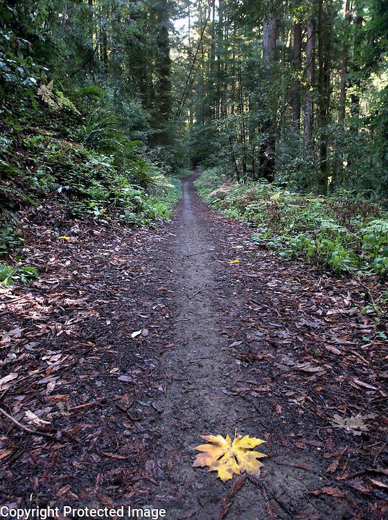 Land of Medicine Buddha<br /> Soquel, California<br /> Photo by Shmuel Thaler <br /> shmuel_thaler@yahoo.com www.shmuelthaler.com